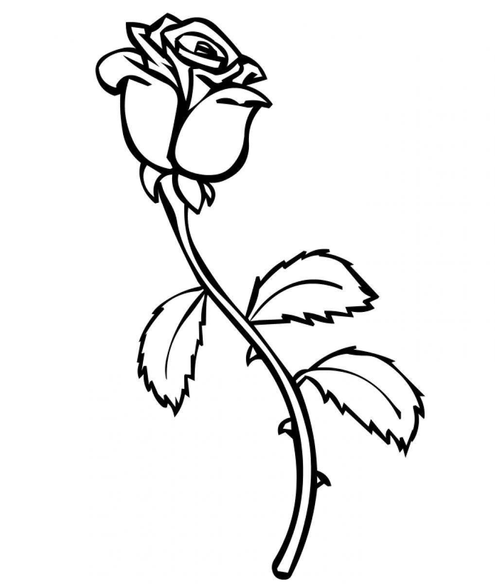 1018x1200 Cool Coloring Page Of A Rose Long Stem Bud Printable
