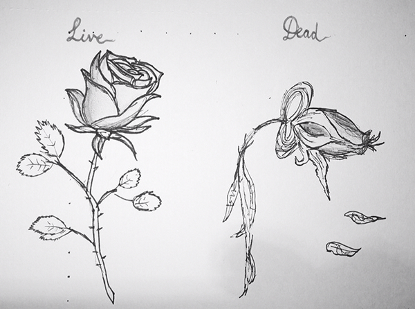Line Drawing Step By Step : Simple rose drawing step by at getdrawings free for