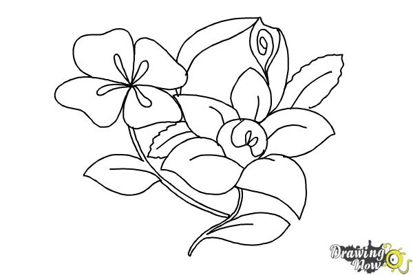 600x400 Steps To Draw Beautiful Flowers Tags Steps To Draw Flowers How