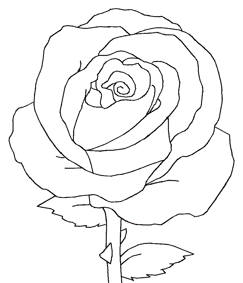 829x963 Drawn Red Rose Black And White Step By Step
