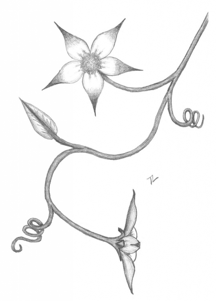736x1024 Flower Pencil Drawing Step By Step Drawing Tutorial