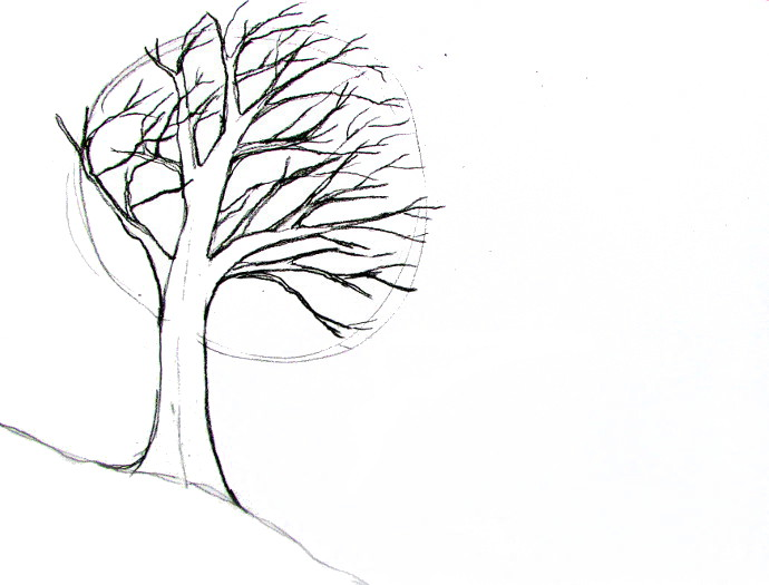 690x525 How To Draw A Tree