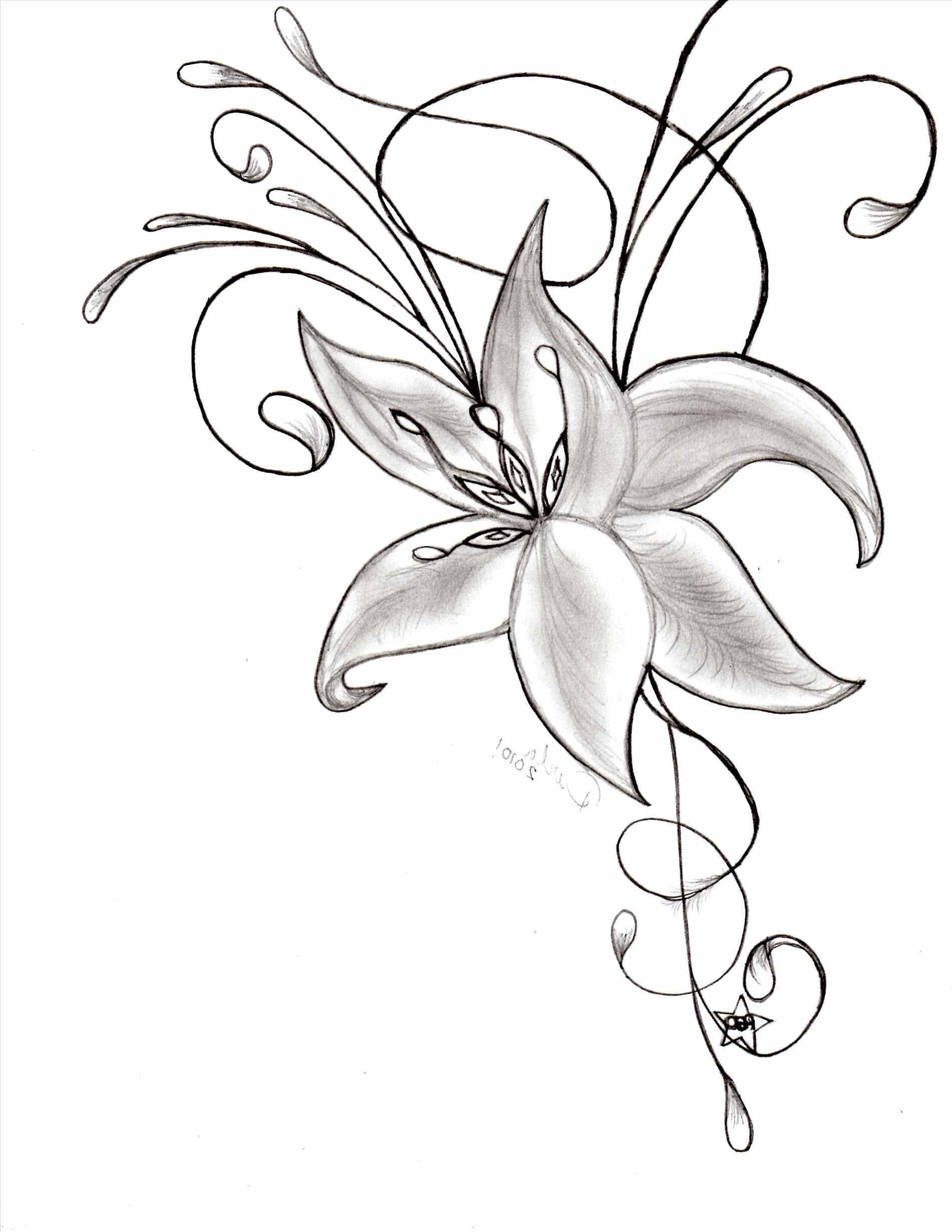 1900x2458 Pictures Of Flowers To Draw