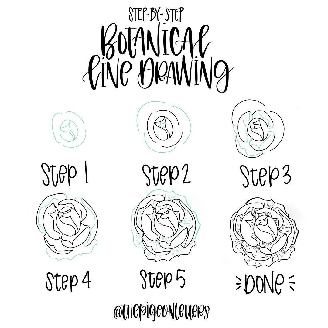 1080x1080 Step By Step Botanical Drawings Drawing Tutorials