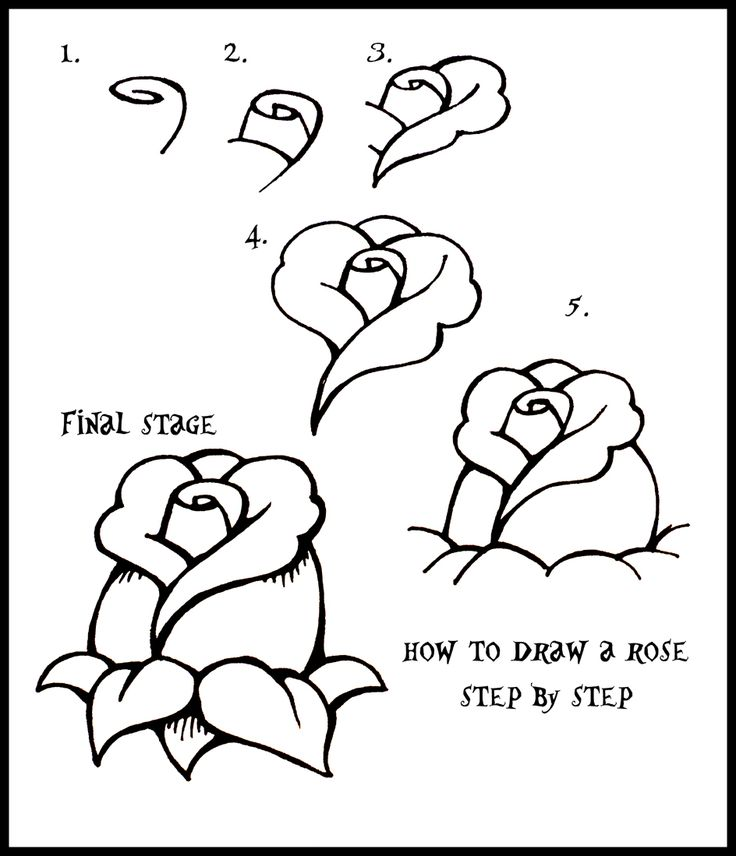 736x856 Valuable Easy To Draw A Rose Drawing Tutorials Step By Com
