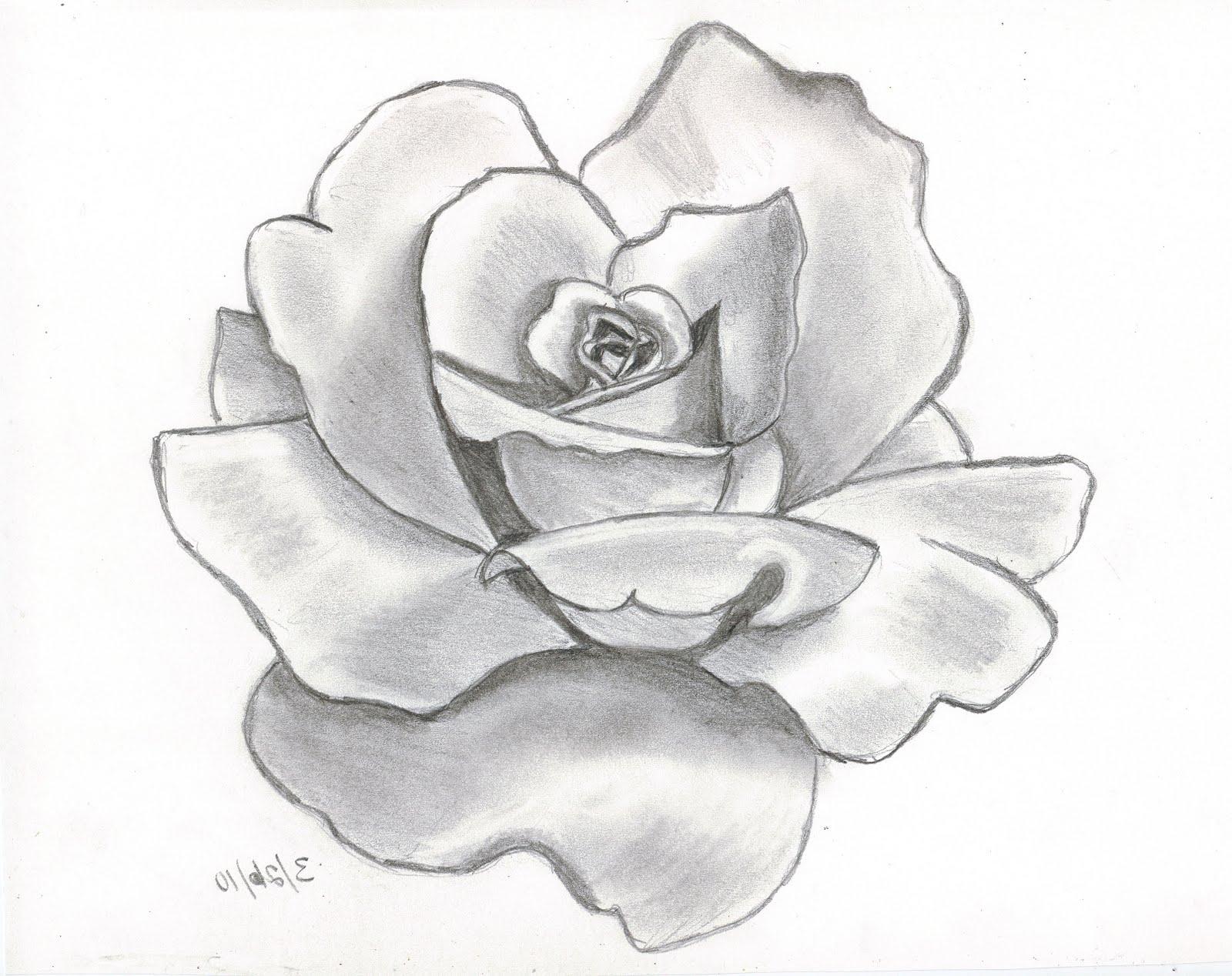 1600x1268 Flower Drawing Rose