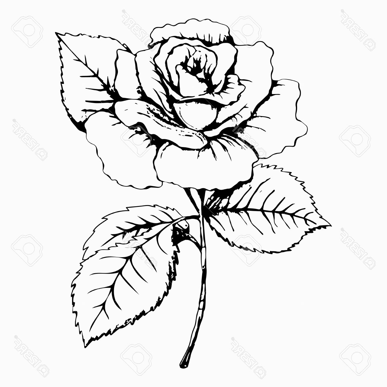 Simple Rose Flower Drawing At Getdrawings Free For Personal