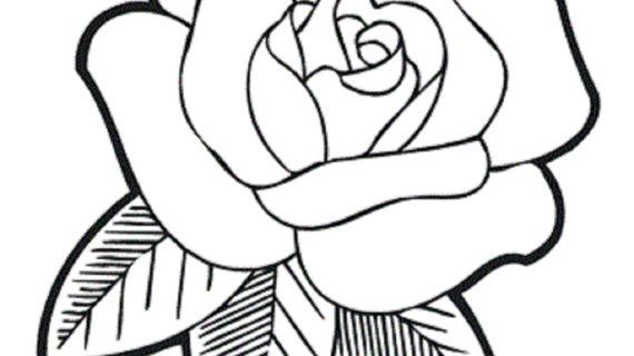 570x320 Rose Flower Drawing Images Surprising Coloring Pages Draw Easy