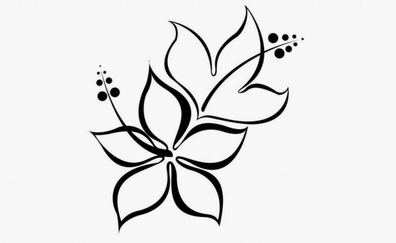 800x491 Rose Flower Drawing Steps Gardening Flower And Vegetables