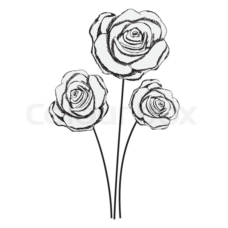 800x800 Rose Flower Drawings. Finest Red Rose Flower Drawing With Rose