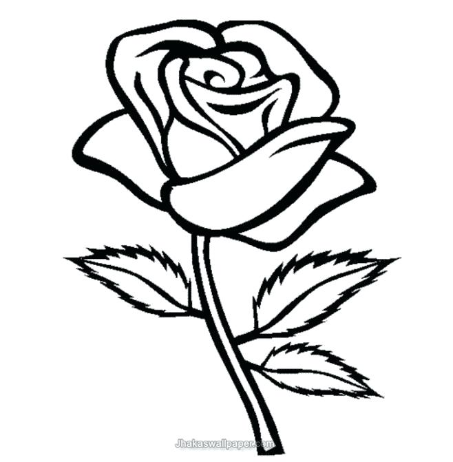 658x671 Coloring Pages For Kids Flowers Com Printable Rose Flower Coloring