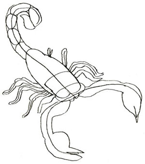 300x339 How To Draw A Scorpion