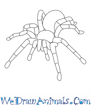 300x350 How To Draw A Tarantula