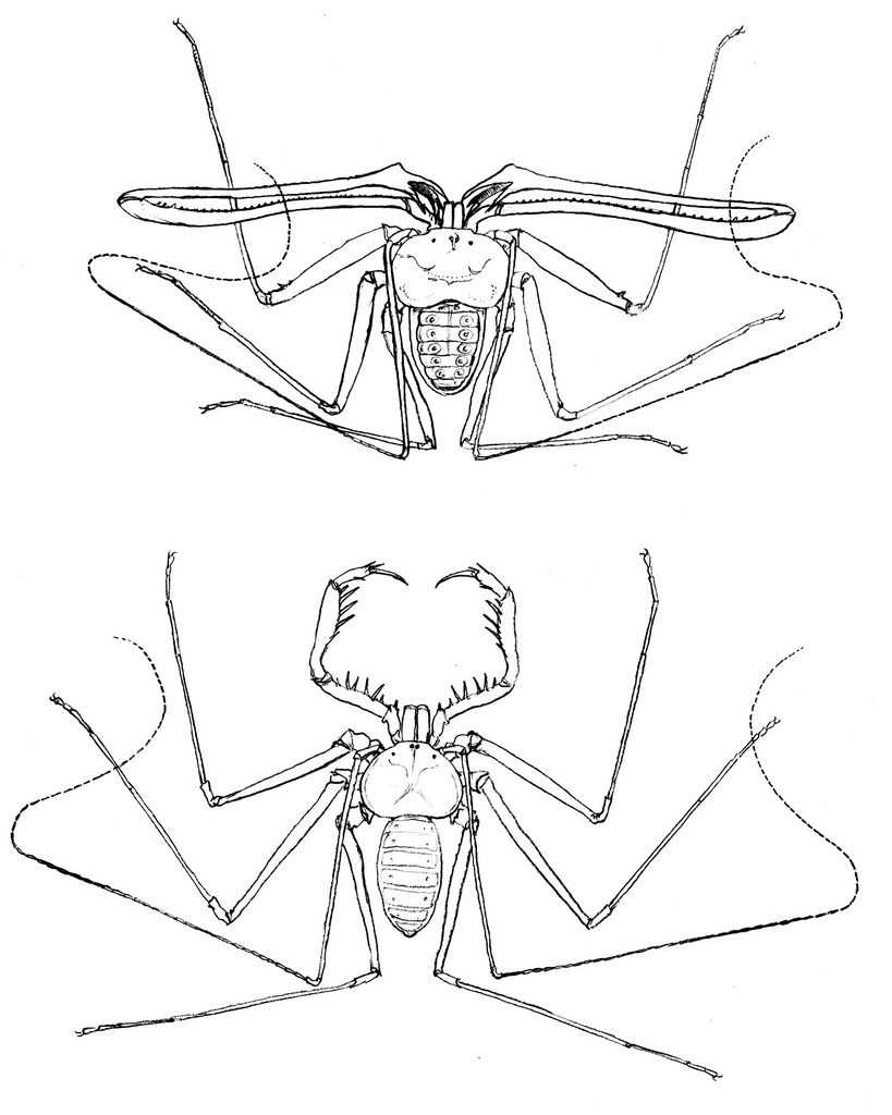 819x1024 Student Years Simple Pencil Drawings Of Amblypygids