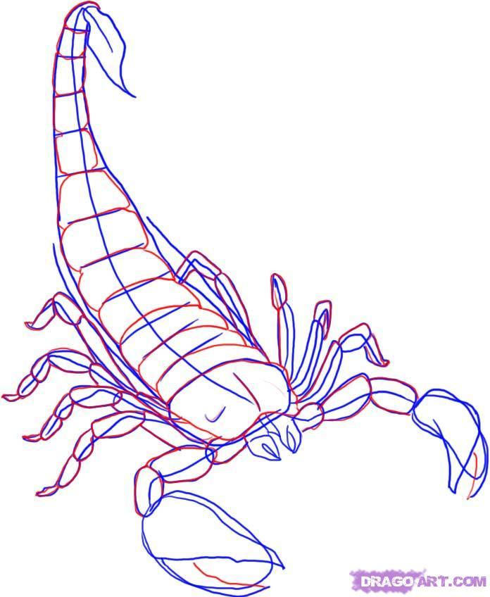 696x848 How To Draw A Scorpion Step 4 Scorpion Scorpion