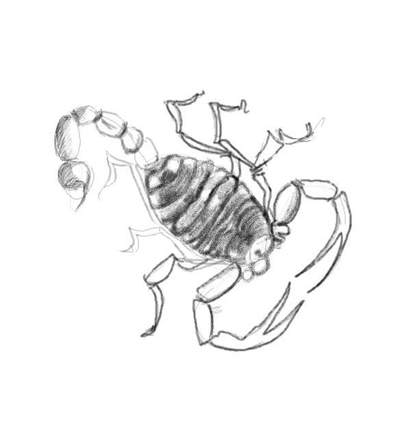 578x641 How To Draw Scorpion
