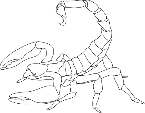480x375 Scorpion Drawings