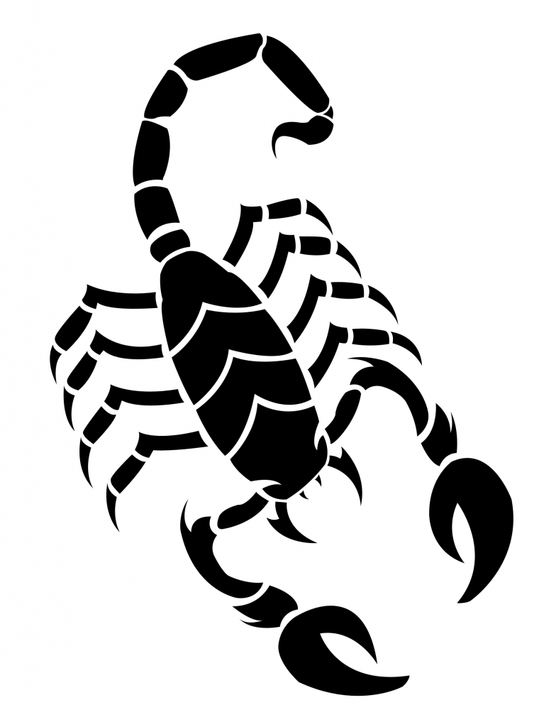760x1024 Drawing Of A Scorpion