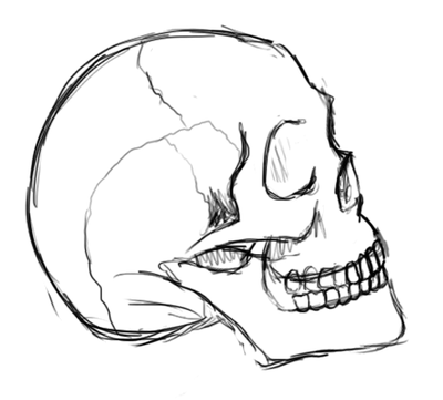 400x361 Skull Test Sketch By Juanx3
