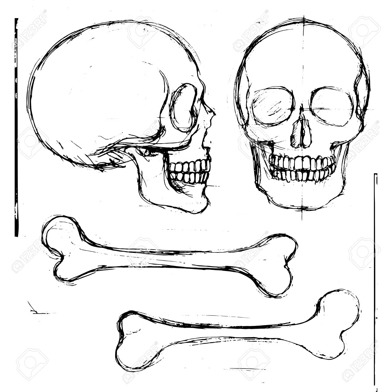 1300x1300 Isolated Pencil Hand Drawn Human Skull And Tibia Bones, Front