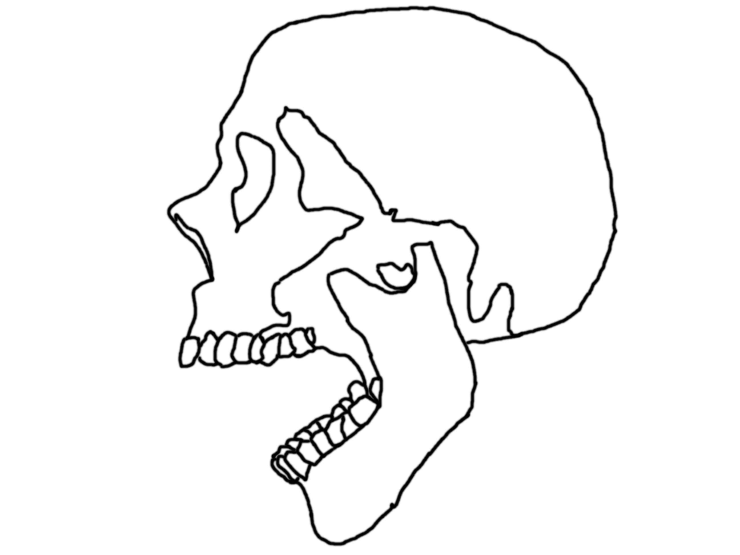 2592x1944 Outline Of Skull By Lkwai
