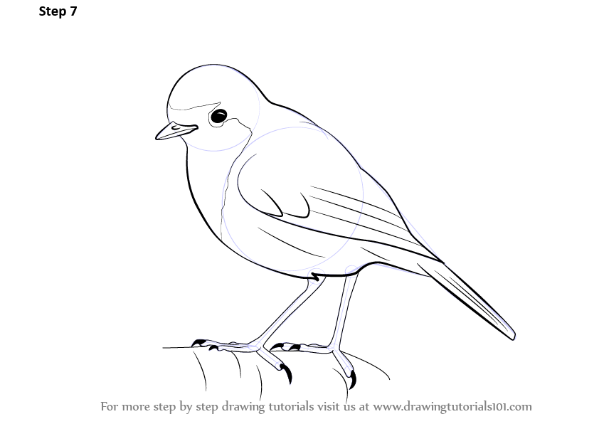842x596 Learn How To Draw A Robin (Birds) Step By Step Drawing Tutorials