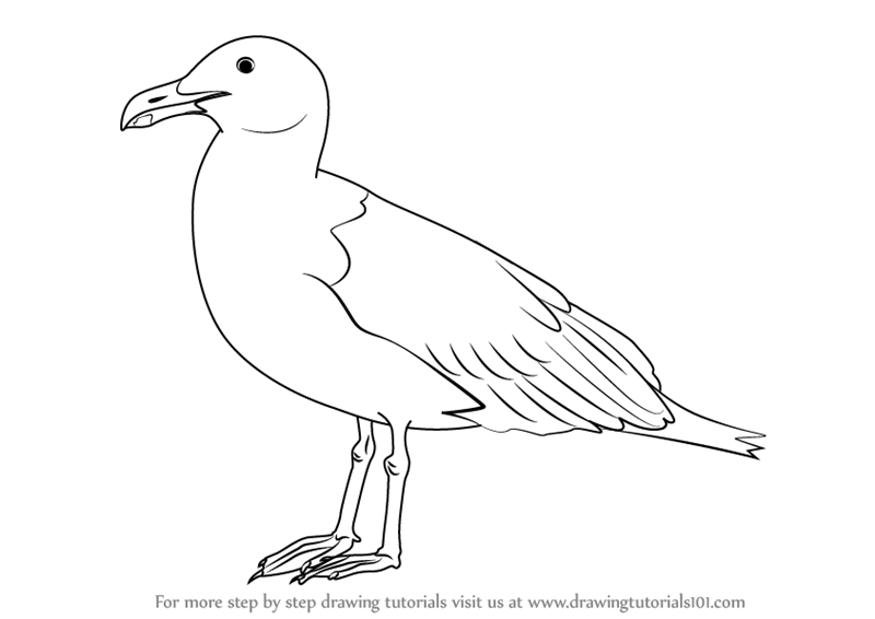 800x566 Learn How To Draw A Seagull (Birds) Step By Step Drawing Tutorials