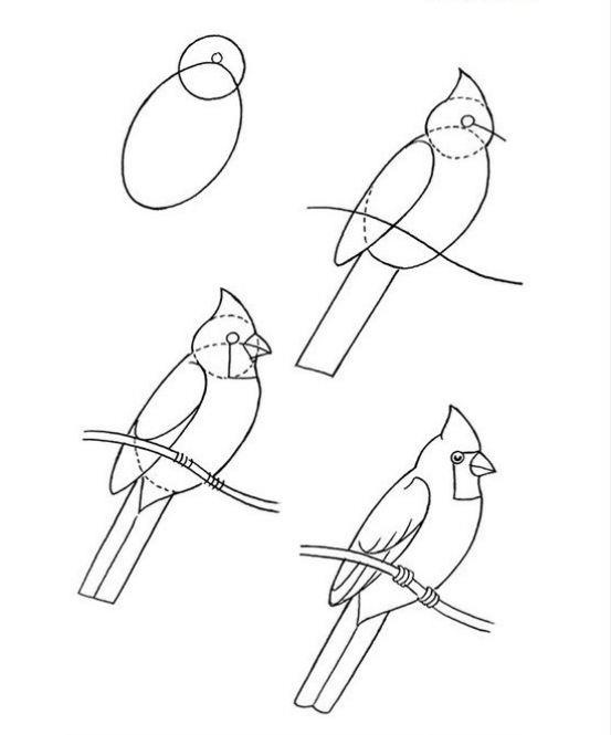 553x665 Pictures Easy Drawings Of Birds Step By Step,