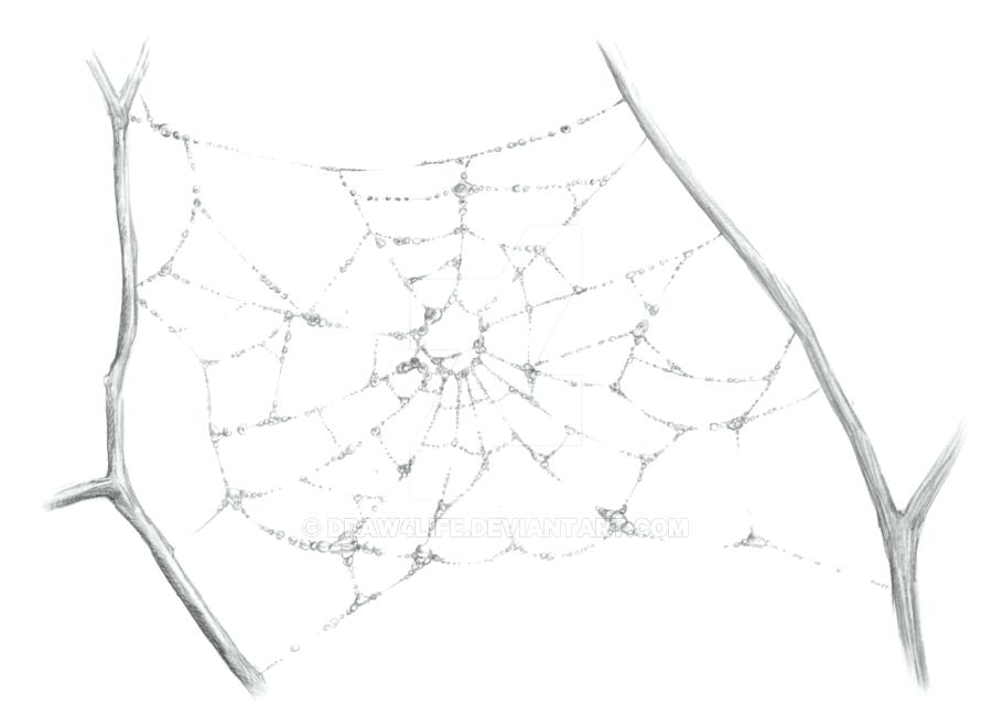 900x659 How To Draw A Spider Web Spider Webs By Draw Spider Web Photoshop