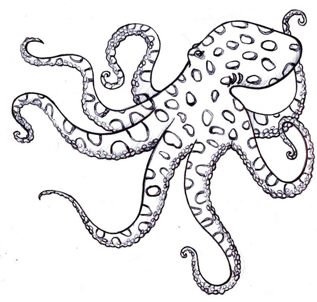 1024x977 Simple Octopus Drawing
