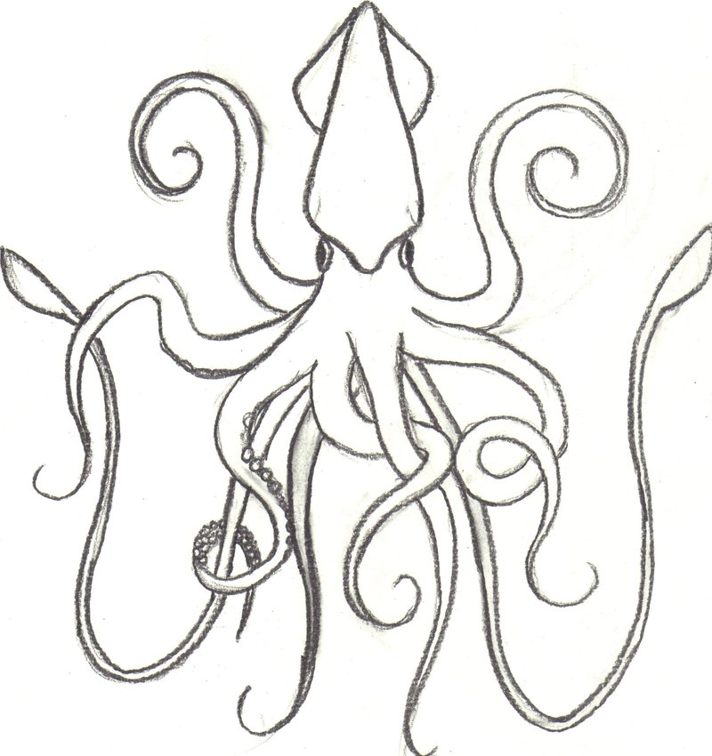 800x850 Squid By Animal897. How To Draw Blue Squid From Splatoon. Vampire