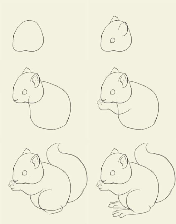 564x716 Learn To Master The Sweet And Playful Squirrel Art Squirrel Art