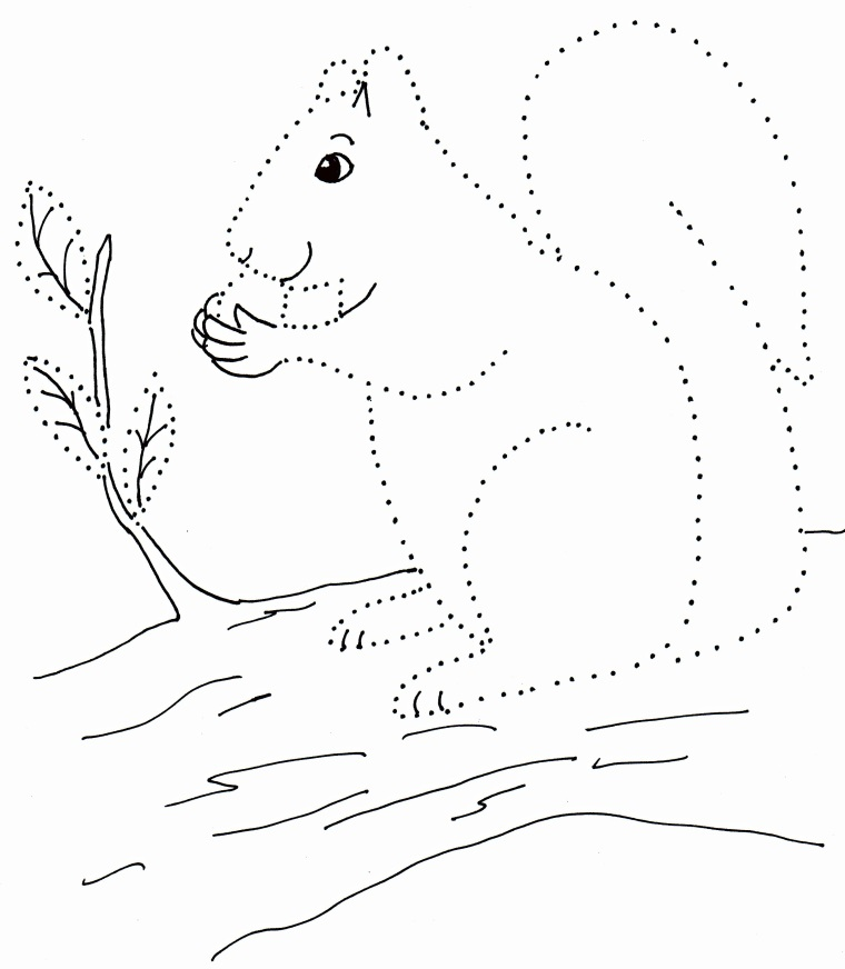 760x872 How To Draw A Squirrel Step 1. How To Draw A Squirrel Step By Step