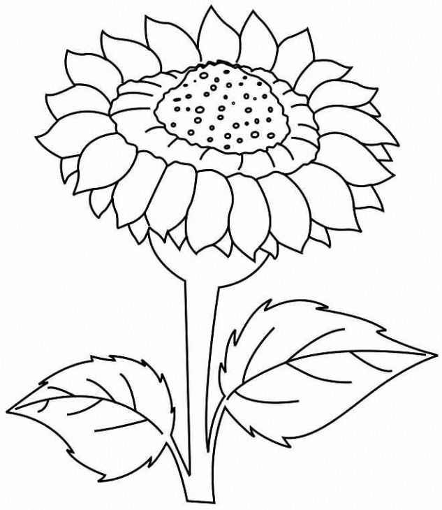 Simple Sunflower Drawing