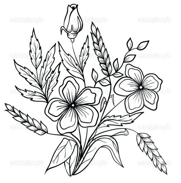 618x623 Coloring Pages Wonderful Flower Drawing Outline. Lily Flower