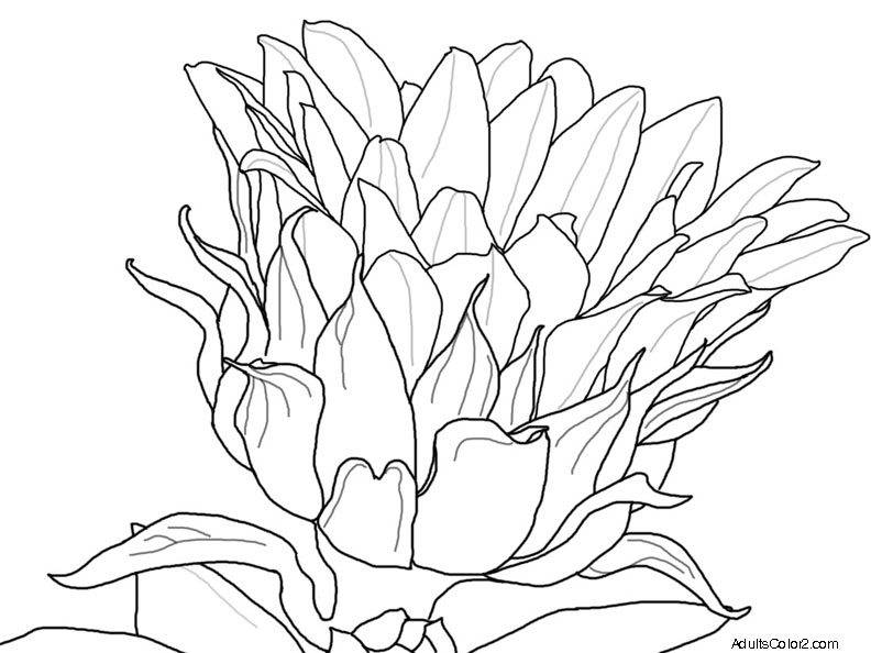 792x594 Flower Coloring Pages Beautiful Blossoms