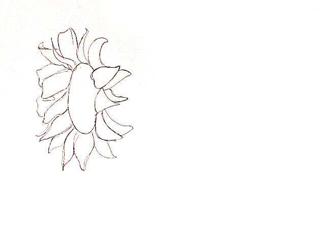 621x460 How To Draw Sunflowers