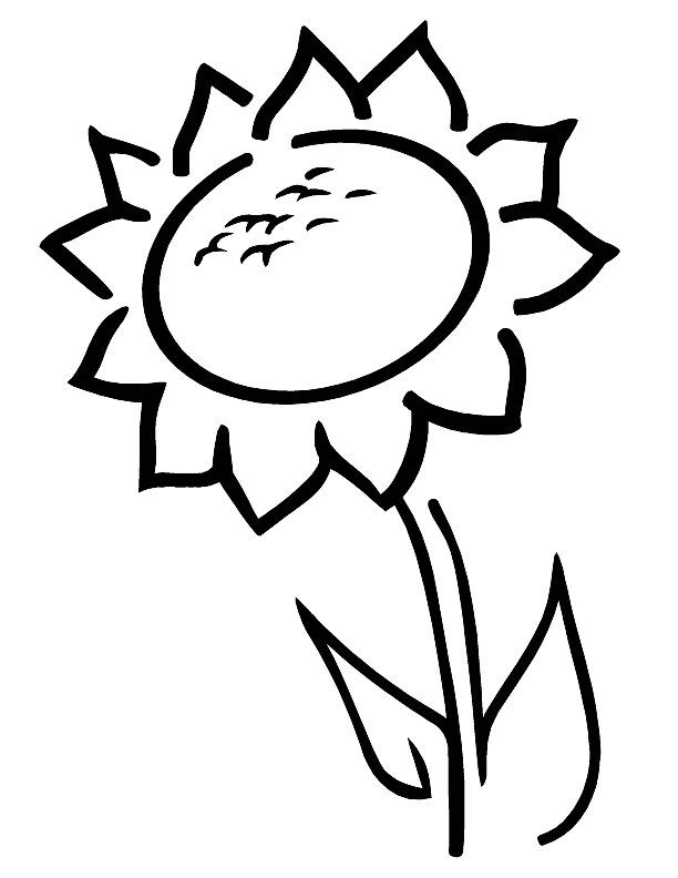 612x792 Printable Sunflower Coloring Pages Coloring Me