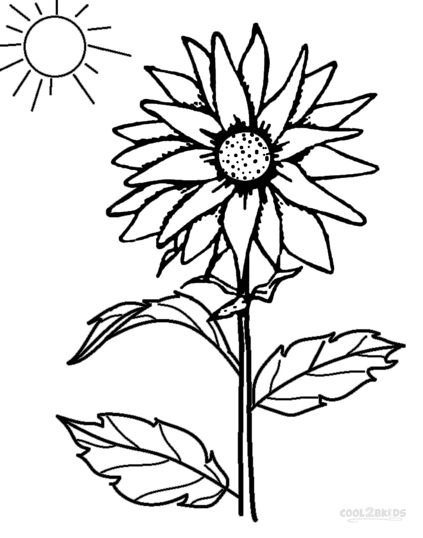850x1082 Printable Sunflower Coloring Pages For Kids Cool2bkids