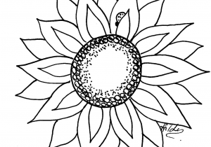 300x210 Simple Sunflower Drawing