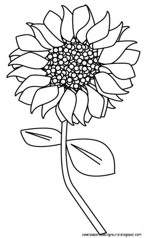 484x800 Simple Sunflower Drawing Wallpapers Background