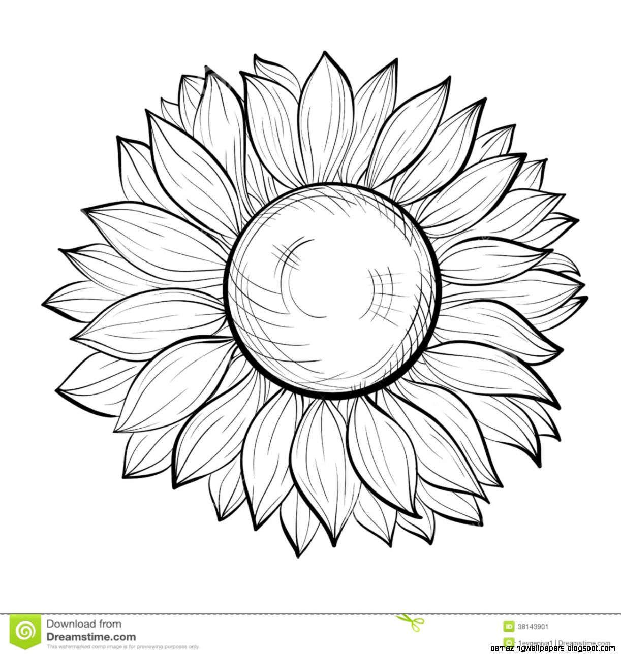 1222x1292 Sunflower Drawing Black And White Amazing Wallpapers