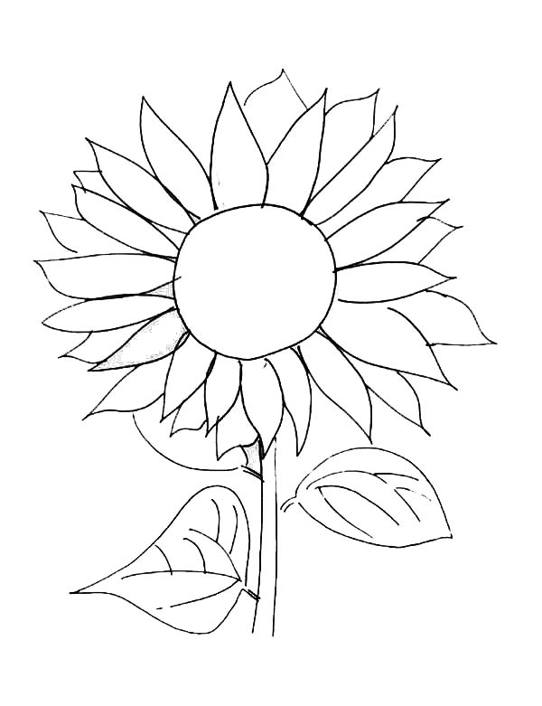 600x781 Sunflower Picture Coloring Page