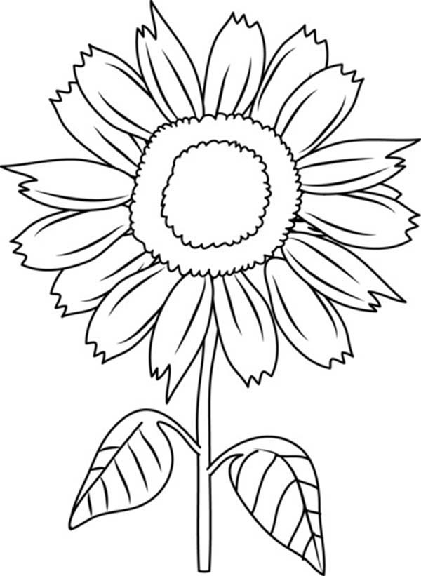 600x821 Beautiful Sunflower Coloring Page