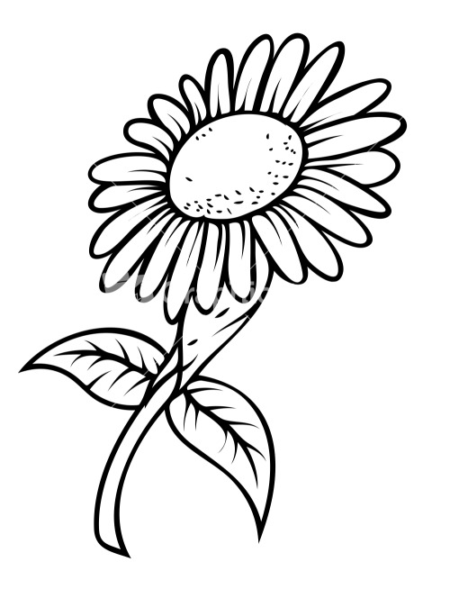 500x654 Sunflower Drawing Template