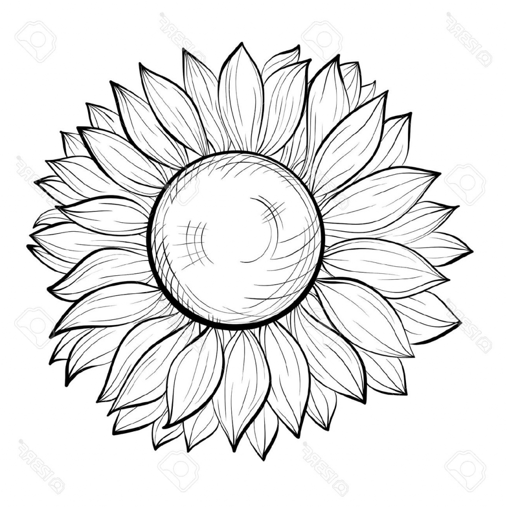 1024x1024 Black And White Sunflower Drawing Simple Sunflower Drawing