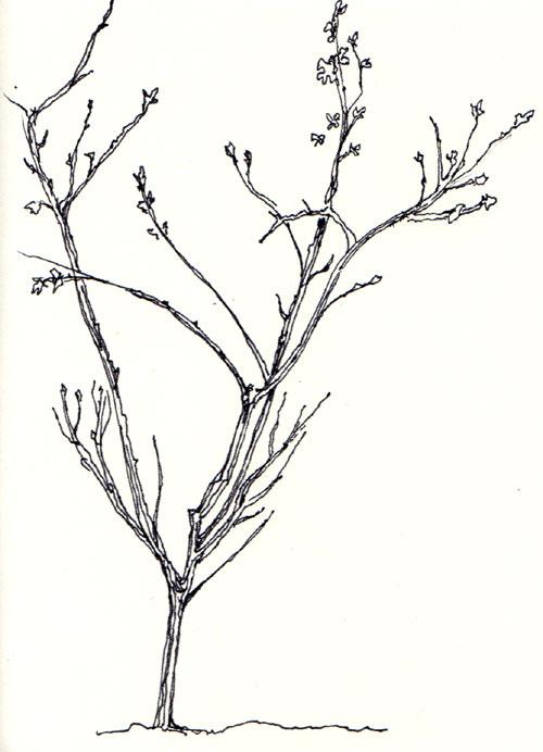 500x692 Simple Tree Drawing Tattoo