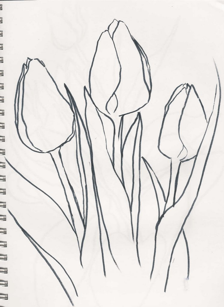 Simple Tulip Drawing