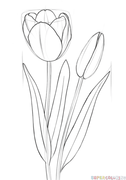 403x575 How To Draw A Tulip Step By Step. Drawing Tutorials For Kids