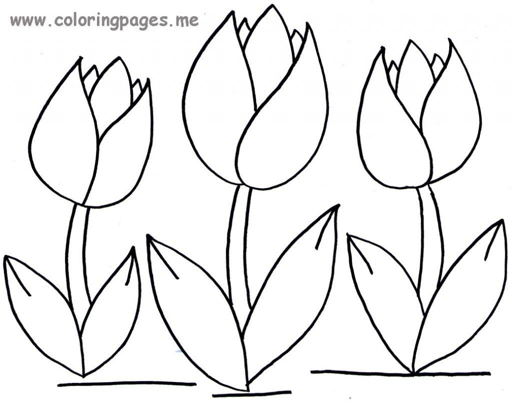 1024x828 Simple Tulip Coloring Page Simple Colorings